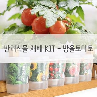키우기쉬운 반려식물 미니화분 재배 세트 방울토마토 미니화분 식물인테리 상담문자환영 F0000974487