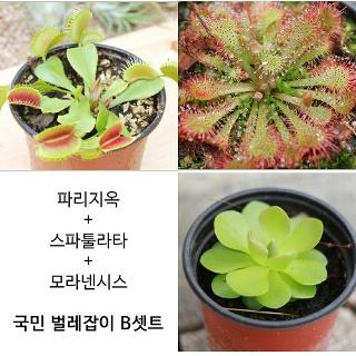벌레잡이 국민B세트 - [블룸] 파리지옥 외 식충식물 13종