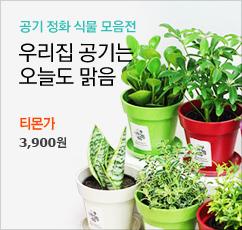 겨울 공기정화식물&화분 총집합★