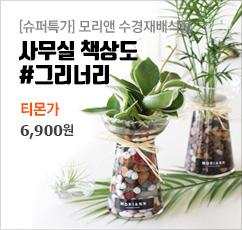 [슈퍼특가] 수경식물  6900원★무배