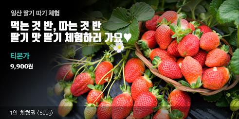 새콤달콤 딸기 따기 체험권